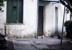 一个猫公寓房/剧场的例证有玩具和四只不同小猫的包括:暹罗语,安哥拉猫和平纹 库存照片