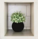 一个现代黑花瓶的布什 库存图片