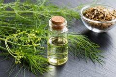 一个瓶与新鲜的茴香枝杈的茴香精油 库存图片