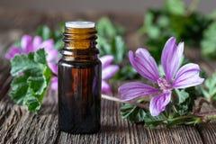 一个瓶共同的与开花的锦葵属sylv的冬葵精油 免版税库存照片