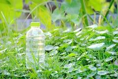 一个瓶在绿色热带庭院的饮用水有温暖的光的 库存图片