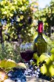 一个瓶在wineyard的红葡萄酒 免版税库存照片
