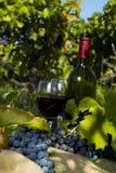 一个瓶在wineyard的红葡萄酒 免版税库存图片