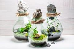 一个瓶子的美妙的有生命的植物有自已生态系的 库存照片