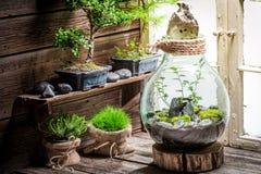 一个瓶子的美妙的雨林有自已生态系的 免版税库存图片