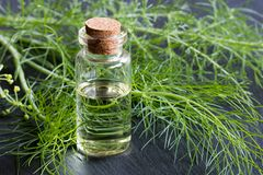 一个瓶茴香精油用新鲜的茴香 免版税库存图片