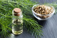 一个瓶茴香精油用新鲜的茴香 库存照片