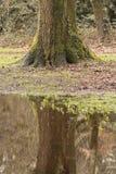 一个生苔树干在水坑反射了 免版税库存图片