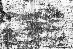 一个生锈的门的纹理 库存照片