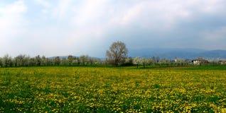 一个用花装饰的领域在意大利 库存照片