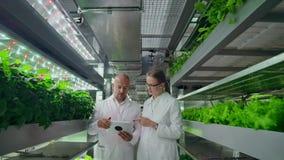 一个男人和一名妇女白色外套的是在未来的现代实验室增长的沙拉和菜的 股票录像