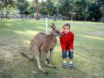 一个男孩和一只袋鼠在一个自然公园在澳大利亚 免版税库存照片