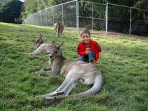 一个男孩和一只袋鼠在澳大利亚的一个自然公园 库存图片