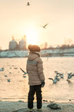 一个男孩和一只鸟在河 免版税库存图片