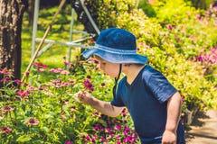 一个男孩在巴拿马嗅到一朵热带花 库存图片