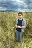 一个男孩的画象麦田的 图库摄影