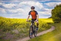 一个男性骑自行车者在一个美丽如画的黄色油菜籽领域乘坐 免版税库存照片