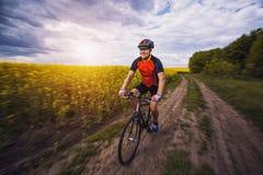 一个男性骑自行车者在一个美丽如画的黄色油菜籽领域乘坐 库存图片