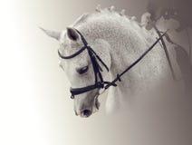 一个白马的画象 图库摄影