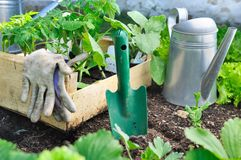 一个盘子的菜植物在庭院里 免版税库存照片