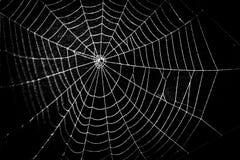 一个相当可怕惊恐蜘蛛网为万圣夜 图库摄影