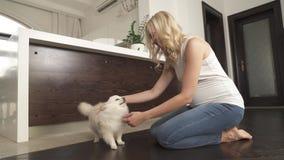 一个相当怀孕的金发碧眼的女人坐抚摸和使用与她的白色pomeranian波美丝毛狗狗的地板 她微笑 股票录像