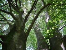 一个看法到树里 免版税库存照片