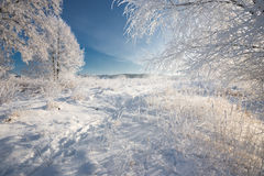 一个真正的俄国冬天 与使目炫白色雪的早晨冷淡的冬天风景和树冰、树和饱和的蓝天 免版税库存图片