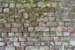 一个砖墙的背景有青苔和杂草的 免版税库存图片
