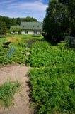 一个私有房子的绿色菜园 库存照片