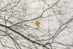 一个秋季公园-分支和一片唯一叶子 库存图片