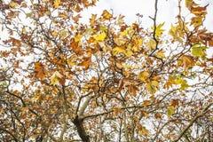 一个秋季公园-叶子和分支 库存图片