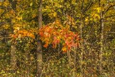 一个秋季公园-灌木 库存照片