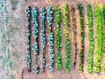 一个秋季小菜园的顶视图耕种与na 库存照片