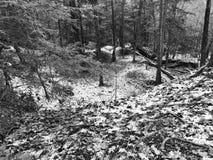 一个积雪的山沟的一个黑白看法在冬天 免版税库存图片