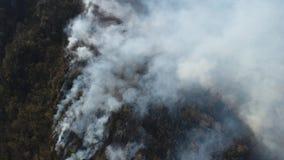 一个移动的空中英尺长度飘动在浓烟盖的森林 股票视频