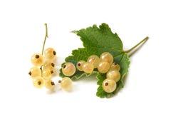 一个空白无核小葡萄干的浆果与叶子的 免版税库存图片