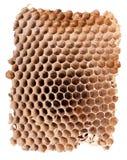 一个空的大黄蜂嵌套的详细资料 免版税库存照片