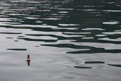一个空的瓶在湖漂浮 库存图片
