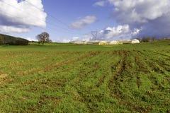 一个空的绿色领域的温室 图库摄影