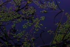 一个童话湖在森林,树在水中被反射 背景 自然 背景 自然 免版税图库摄影
