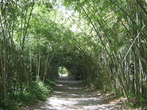 一个竹树丛在苏呼米,阿布哈兹 库存照片