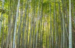一个竹森林 库存照片