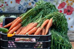 一个箱子在市场桌上的新鲜的红萝卜 库存图片