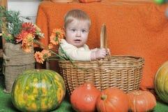 一个篮子的婴孩在南瓜旁边 库存照片