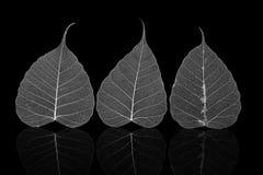 一个精美叶子胞状结构的宏指令 免版税图库摄影