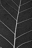 一个精美叶子胞状结构的宏指令 库存图片