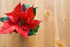一个红色冬天在木头上升了 免版税库存照片