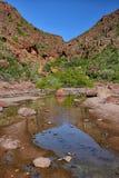 一个红色岩石峡谷和浅绿洲水池在墨西哥沙漠 库存照片