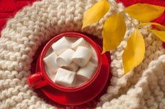 一个红色杯子可可粉用蛋白软糖和灰棕色编织了红色表面上的围巾 库存照片